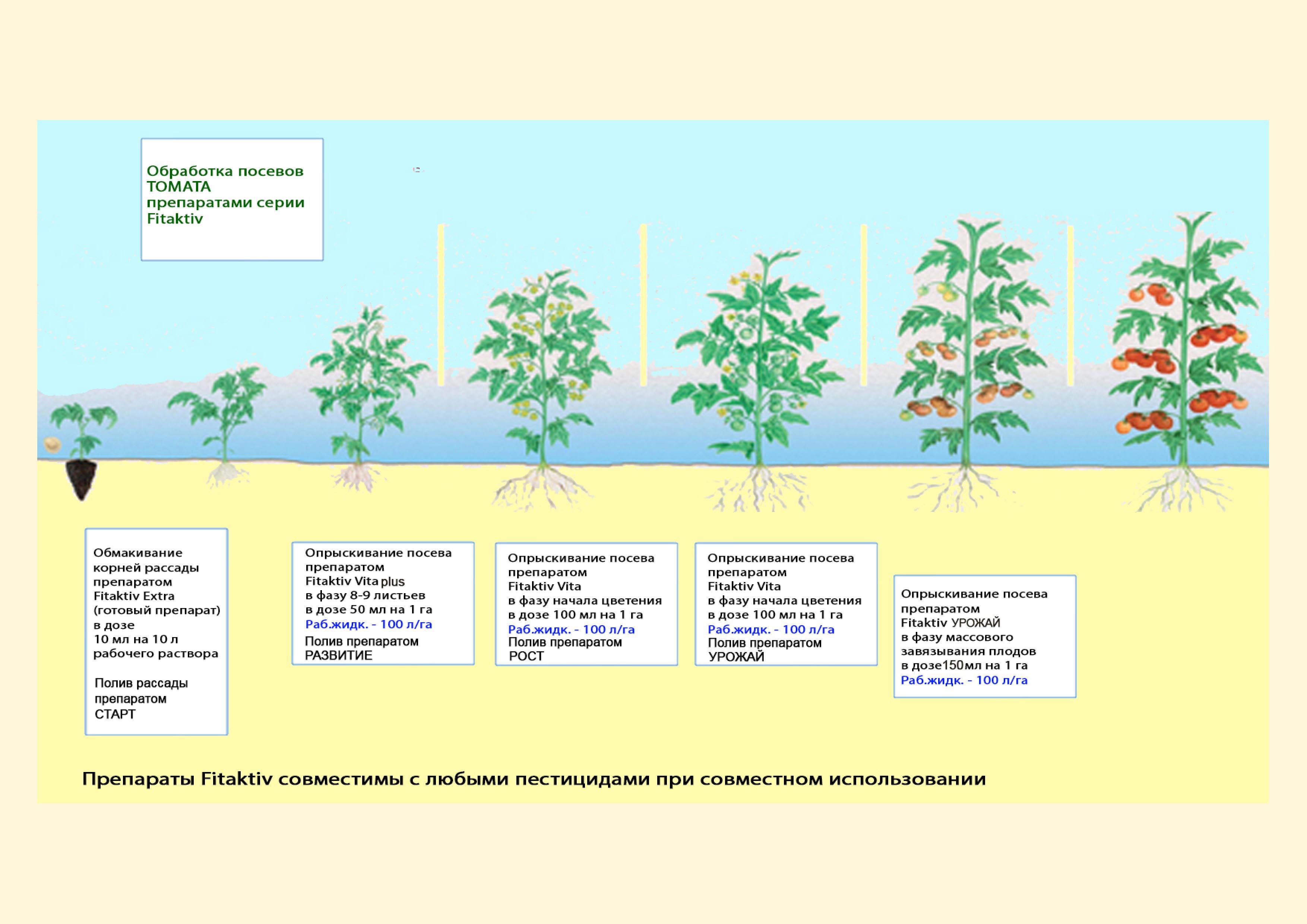 двигатель этапы выращивания помидоров в картинках семи машины район